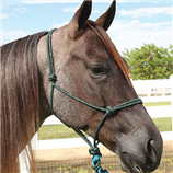 HALTER ROPE WITH 10' LEAD- GLITTER - Palmer Farm and Ranch